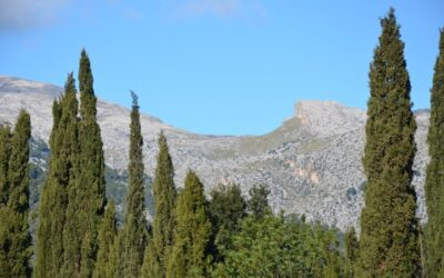 Picture of the day – Puig Tomir through the Cypress treas